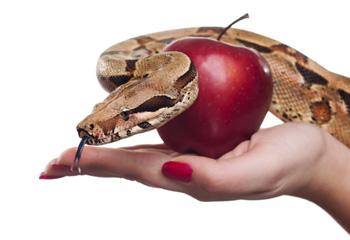 tentacion-todoconsejo.com